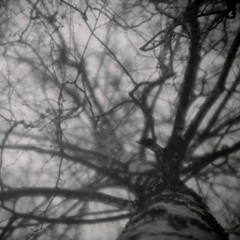 (NooFZz) Tags: bw tree landscape