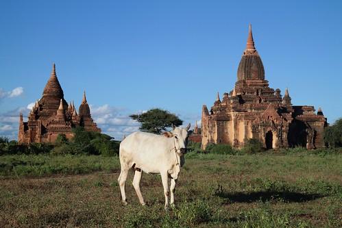 Bagan_2189c
