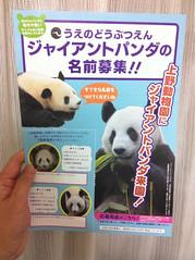 パンダの名前の応募用紙は都内郵便局でも配布中  http://bit.ly/iaXoXT