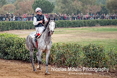 Caballos pura sangre ingleses en las carreras de Vila-seca (Nicolas Moulin (Nimou)) Tags: horses cheval caballos carreras santantoni vilaseca cheveaux purasangre hipidromo