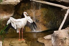 Bird Thingy (MakeLifeMemorable) Tags: life bird make animals photo emily 1987 sony may example spencer alpha memorable a230 muhly makelifememorable lonegungrrly