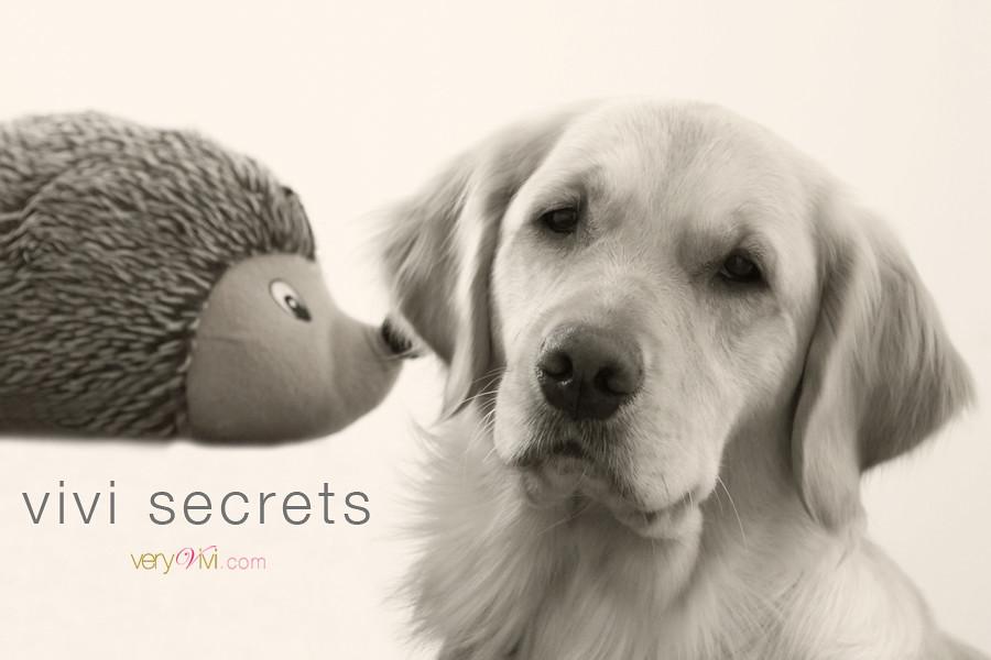 {1/20/11 ~ 20/365 2011} ViVi Secrets