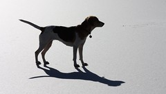 Silhouette Of Shylah (wolf68450) Tags: winter shadow dog snow ice beagle rock mix hound