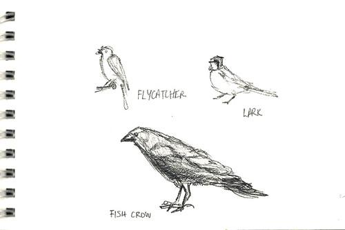 Flycatcher, lark, fish crow