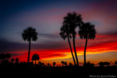 Palm Trees at Twilight (corran105) Tags: seminolecounty lakejesup lakejessup palmtree twilight sunset evening hiking nature landscape prairie stjohnsriver sanford florida centralflorida colorful vibrant vsco vscofilm color sky
