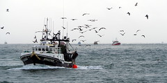 (Phoebus58) Tags: boat peche mouette goeland seagull mer sea ocean atlantic bretagne brittany breizh bzh guilvinec finistere paysbigouden
