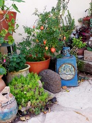Rosh Hashana Atmosphere (claudia.joseph16) Tags: pmmerganite fruit red juicy tree plant green vase pot jar garden gardening outdoor