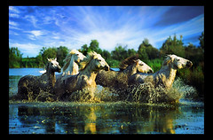 124510 (nikolla_v) Tags: wild horse motion nature water animal speed river outside mammal liberty outdoors freedom daylight movement stream day symbol outdoor wildlife free fast nobody direction americana daytime brook keywords hoof quick liberation waterway symbolic splashing spattering splattering galloping haste hurrying accelerating sloshing