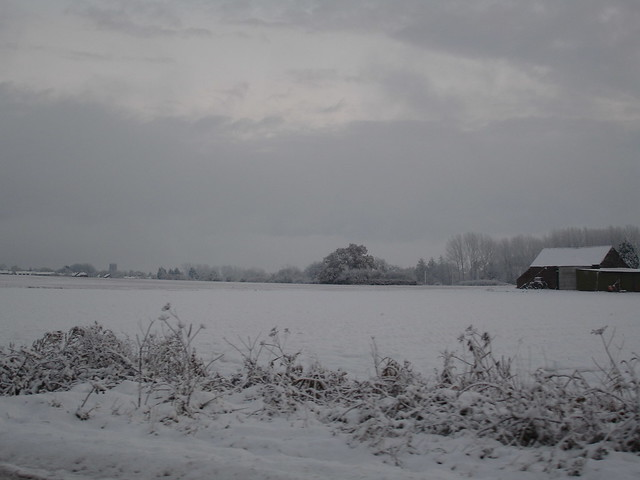 snowy november in norfolk (1)