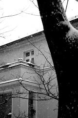 Schneefall (-Alina-) Tags: schnee bw snow berlin fenster finestra neve albero freddobastardounapuntinaeccessivo