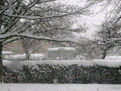 Blizzard (Little Boffin (PeterEdin)) Tags: city winter cloud snow cold weather clouds lumix snowflakes scotland town edinburgh university snowing snowfall edinburghuniversity blizzard kb universityofedinburgh panasoniclumix kingsbuildings cityofedinburgh edinburghcity dmctz3 tz3 panasonictz3 panasonicdmctz3 thankyouforflickr thekingsbuildings