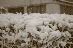 IMG_6444 (pellegrini_paris20) Tags: snowflake schnee white snow paris canon eos flake neige weiss blanc ville flocons flocon itsnows flocke flocken schneeflocke schneit flocondeneige souslaneige esschneit floconsdeneige ilneige 1000d