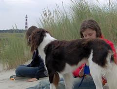 Photo (SVnetwork_photo) Tags: dog wind ameland svnwind