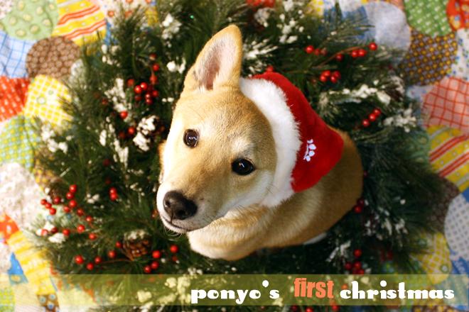 *Ponyo's first Christmas*