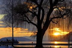 Saule et coucher de soleil à Bienne (jd.echenard) Tags: sunset tree colours couleurs sonne arbre coucherdesoleil biel bielbienne bienne bielersee seeland nikond200 lacdebienne cantondeberne paysagesuisse switzerlandlandscape schweizerlandschaft bielerstrandbad lakeofbienne plagedebienne nikonafsnikkor55300mm1456ged