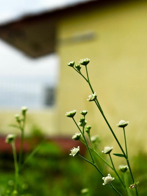 IMG_0661 Nature