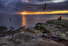 Thanks for 1,000,000 Views!! (Brandon Godfrey) Tags: light sunset canada beach water colors clouds coast rocks colorful bc eagle photoshopped baldeagle logs rocky columbia victoria vancouverisland driftwood pacificnorthwest co