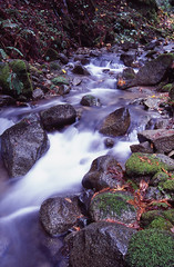 Fall Creek 7 (DY Pics) Tags: california santacruz film water nikonf100 velvia felton velvia100 runningwater fallcreek feltonca nikonfilmcamera santrcruzcounty