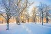 Winter morning (MHjerpe) Tags: winter sun snow cold nature outdoors sweden nobody karlstad värmland deje dömle