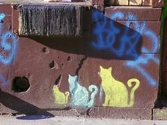 WoosterCats (Street Witness) Tags: street art cat graffiti stencil samsung wooster nv7