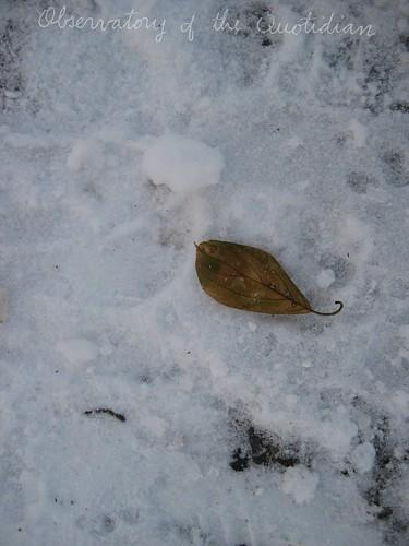 Still Life Leaf