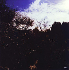 Ginestreto (DraS...) Tags: photo foto rosario dangelo scannerpessimo nogoodscanner fiumidipietralubitel166b