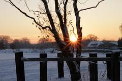 (Mah Nava) Tags: schnee winter light sunset snow sunshine germany deutschland licht sonnenuntergang sonnenschein thepowerofnow