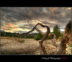 Branches to the sky of Cuneo - Italy - HDR - Margall photography