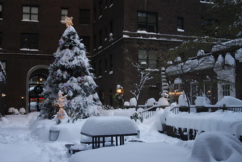 Snow 050