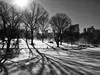 Icy Shadows at The Lake (CVerwaal) Tags: nyc newyorkcity trees winter sun lake snow newyork pen shadows centralpark silhouettes olympus thelake olympusep1 mzuiko17mmf28