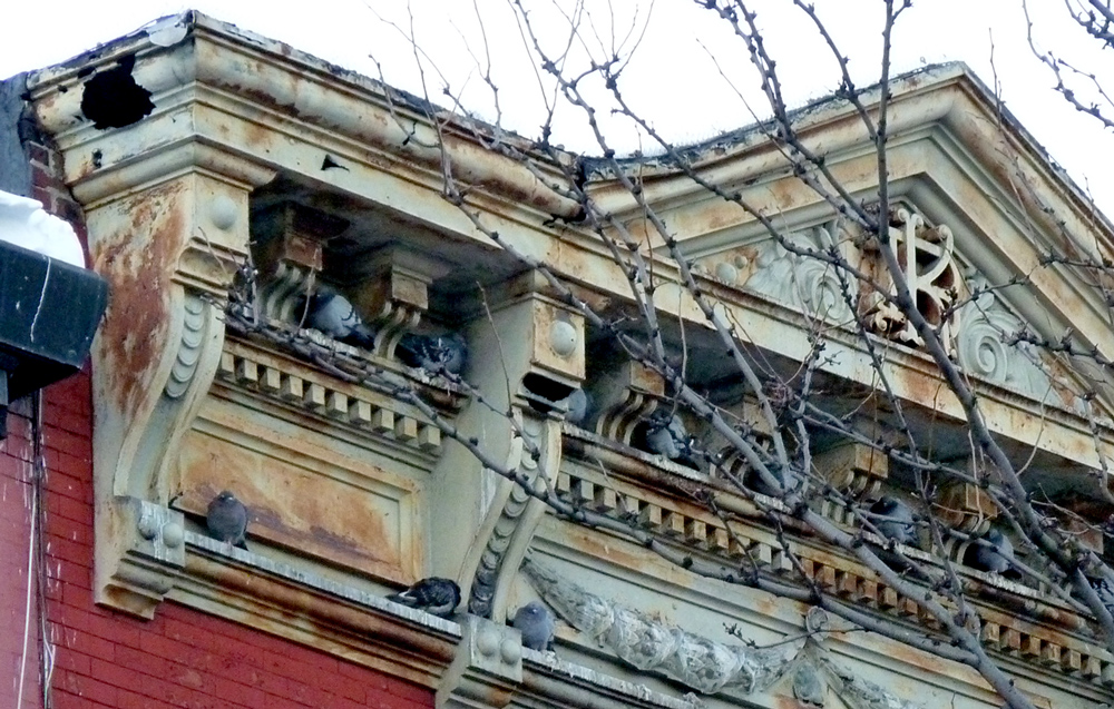 Pigeon Cornice