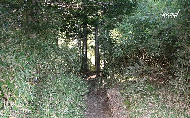 登山口前段的箭竹徑