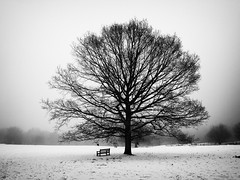 Christmas Morning (Feldore) Tags: christmas winter mist snow tree london fog ethereal mchugh barnet feldore