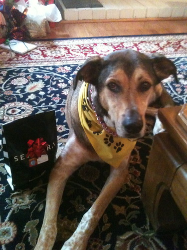 Tripawds three legged dog survey analysis discusses breed, age, gender cancer type and other reasons why canine amputees lose a leg