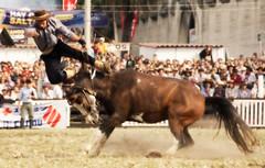 La trampa (Eduardo Amorim) Tags: horses horse southamerica caballo uruguay cheval caballos cavalos prado montevideo pferde cavalli cavallo cavalo gauchos pferd hest hevonen chevaux gaucho  amricadosul montevidu hst uruguai gacho  amriquedusud  gachos  sudamrica suramrica amricadelsur  sdamerika jineteada   americadelsud gineteada  americameridionale semanacriolla semanacriolladelprado eduardoamorim iayayam yamaiay semanacriolladelprado2010