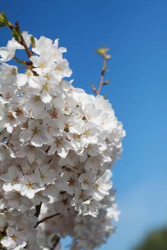 4.1.10 (spring)