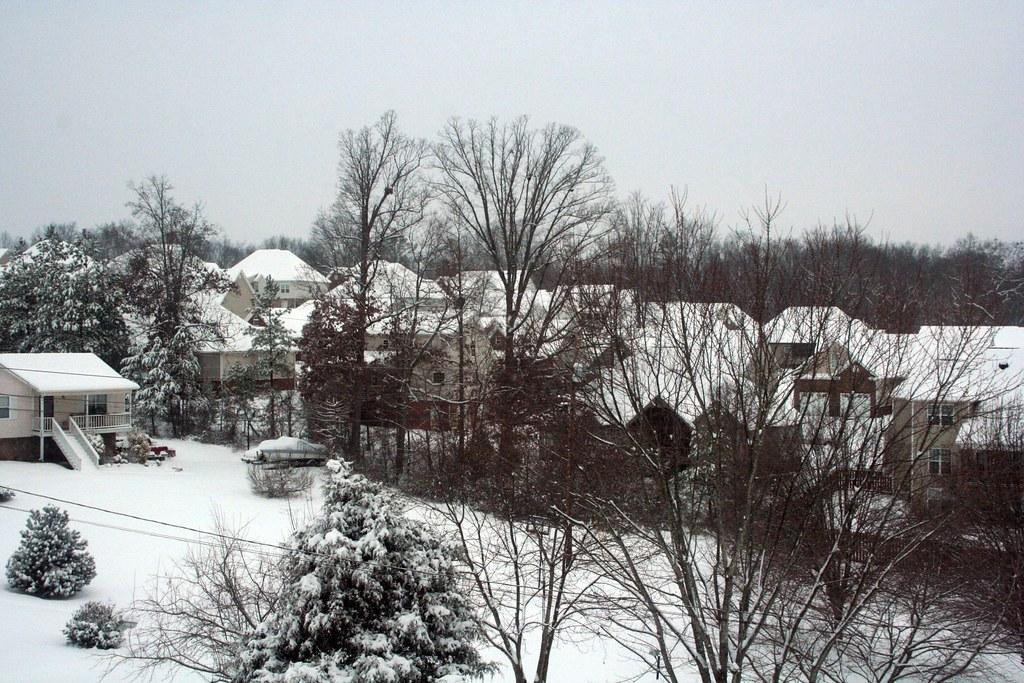 Snow: January 10, 2011