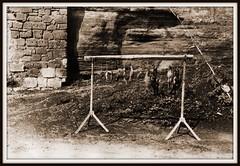 04 settembre 1972. 4 fagiani, 3 quaglie e tre tortore (MARCO_QUARANTOTTI) Tags: