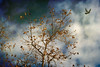 Winter Morning (Rick Insane Diego...) Tags: sky tree bird texture leaves clouds flying bare tamron escondido 2875mm groupshoot sddslr mindigtopponalwaysontop