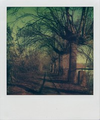 narrow tree-path (Knee Bee) Tags: trees polaroid track path narrow wintersun expird tzartisticfilm