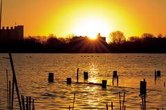 De Poel - Geese highway at sunrise. (Martijn N. van Dam) Tags: yellow sunrise reflections geese goose amstelveen depoel