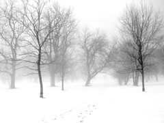 Snow and fog  and trees