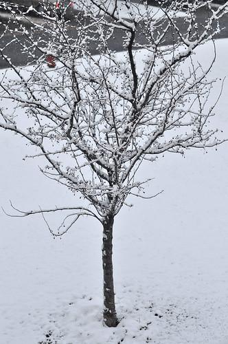 Morning Snow on 4-20