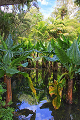 Mauritius - welcome to the jungle! (Romeodesign) Tags: green nature water reflections garden palms botanical island maurice ile banana tropical lush mauritius pamplemousses 550d sirseewoosagurramgoolam