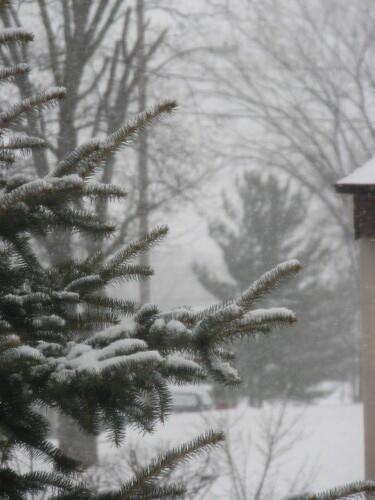 Snow Day 12-6-10 002