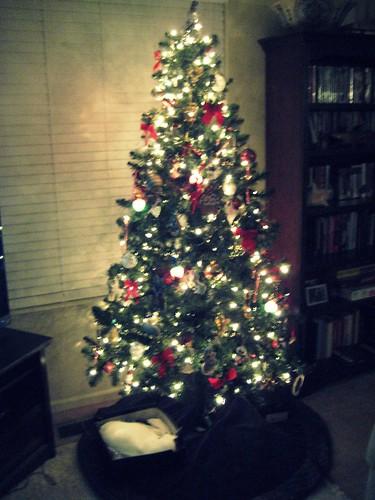 Olympia under the tree