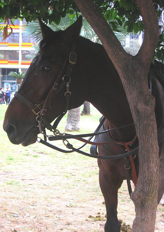 10-12-2010-horse6