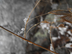 (Photos by Michael Phillips) Tags: park winter baby selfportrait snow macro tree water colors cake wall skyline self canon virginia photo emily model nikon sticker shoot grafitti nikki close photoshoot shot sydney richmond chester presents potrait limb richmondvirginia chesterfield macroshot maymont keebler dinwiddie maymontpark fugifilm macrosticker macrocake nikkikeebler
