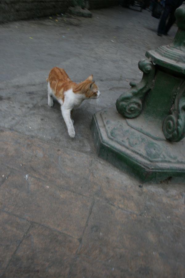 Cairo Cat