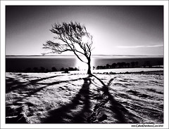 Midwinter sun (ccgd) Tags: bw snow tree scotland highlands shadows e30 sutor